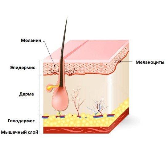 меланин в волосах